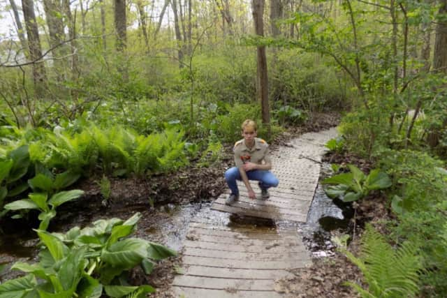 A New Canaan Boy Scout is looking to finish a project at Bristow Sanctuary and Wildwood Preserve, a 17-acre bird sanctuary located off Mead Park.
