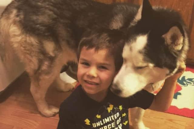Rayo the Handsome Husky and his human sibling.