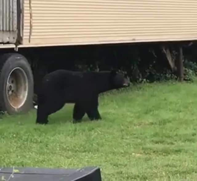 A black bear was spotted in Woodland Park Saturday.