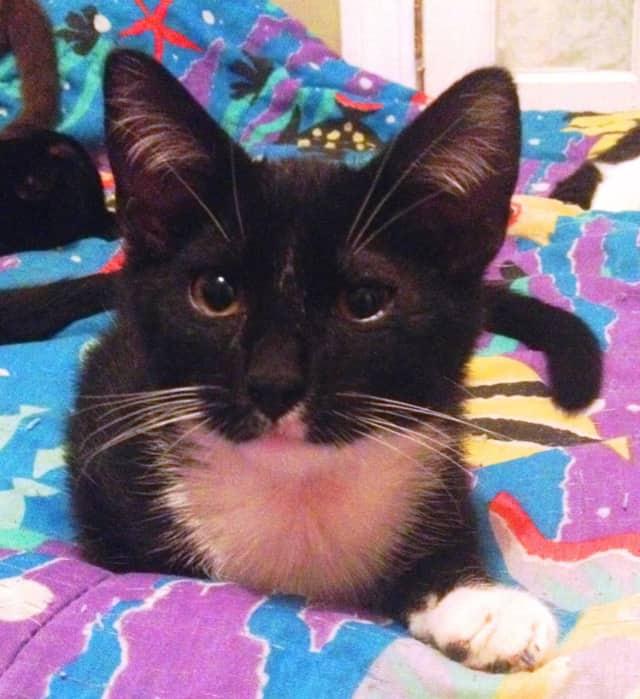 This kitten was found in Mount Vernon on Monday.