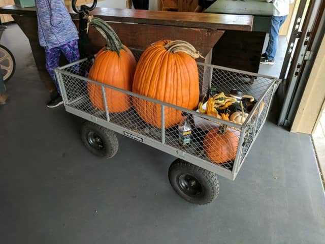 Pick as many pumpkins as you can carry at Jones Family Farms in Shelton.
