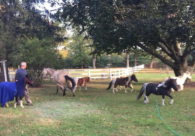 Dash the pony, at far left in blanket, and friends after he was rescued from the pool.