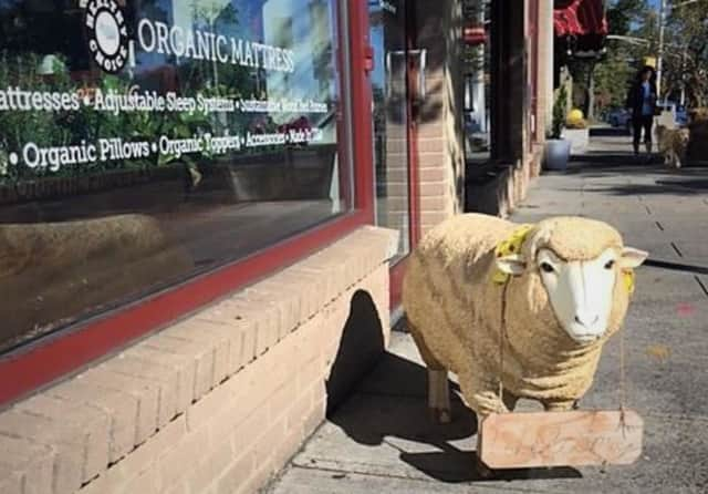 Store owners say removing Betsy would be udderly ridiculous.