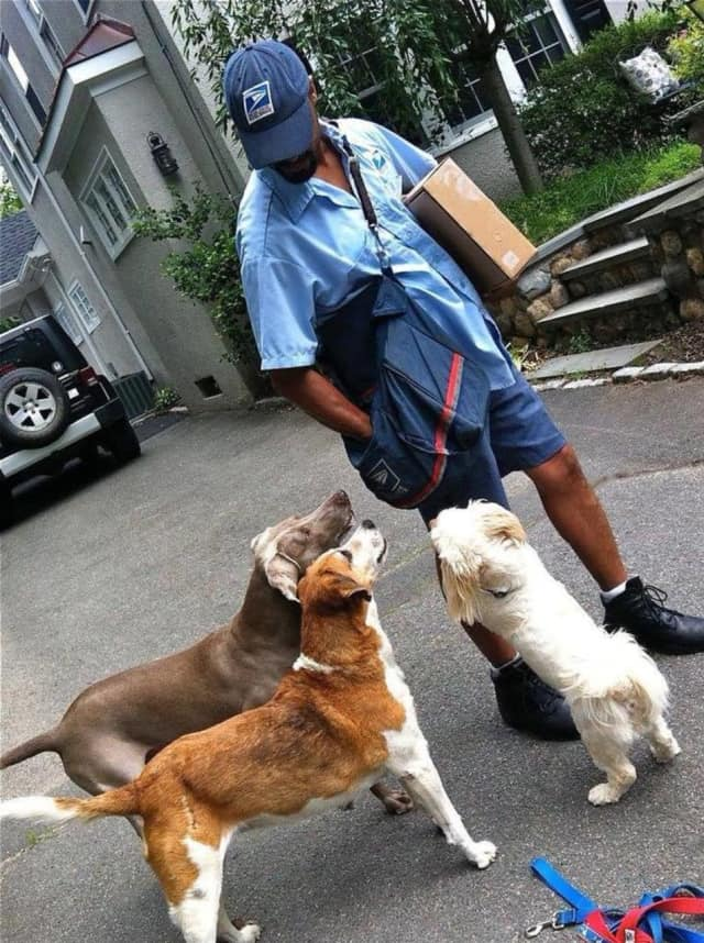 Bill Olave greets neighborhood dogs in Ridgewood.