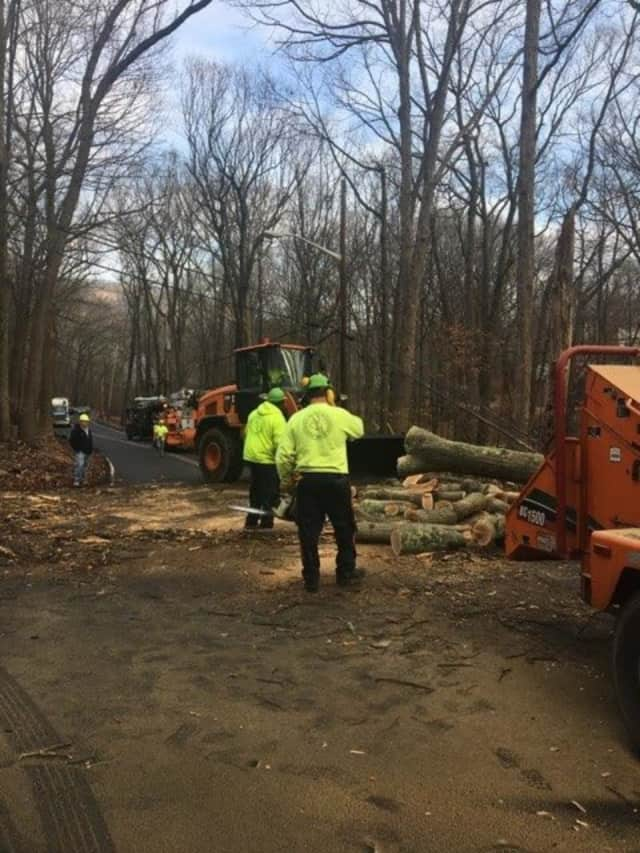 County and O&R employees work to remove a tree blocking Wilder Road.