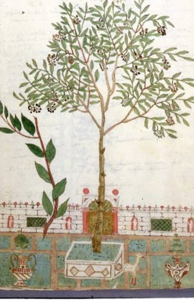 John Dixon Hunt talked about the gardens of Venice in a June 4 lecture presented to members and guests of the Greenwich Decorative Arts Society in Old Greenwich. Courtesy John Dixon Hunt.