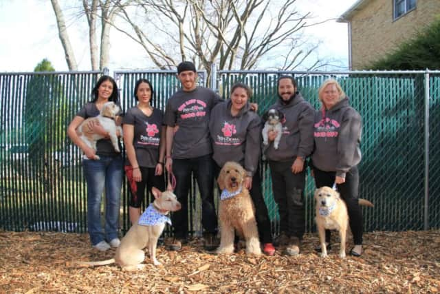 The team at Prima Donna Pet Services in White Plains.