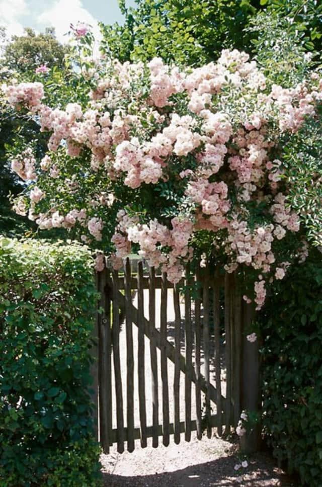 Flowers grown by The Garden Club of Harrington Park.
