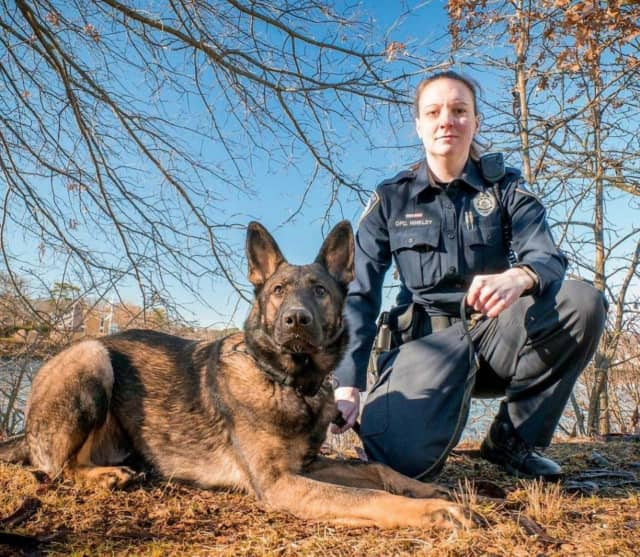 Darien Police K9 Argo and his partner.