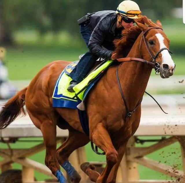 Bob Baffert's horse Justify won the 144th Kentucky Derby. Baffert's other horse, Solomini of Hackensack's Zayat Stables, LLC, finished 10th.
