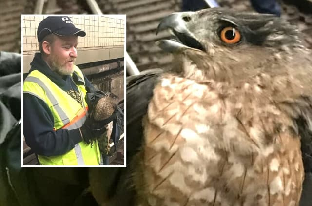 PATH Track Inspector Kevin Ronan with the hawk.
