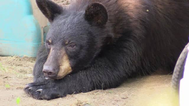 A black bear was hit and killed by a vehicle on I-84.