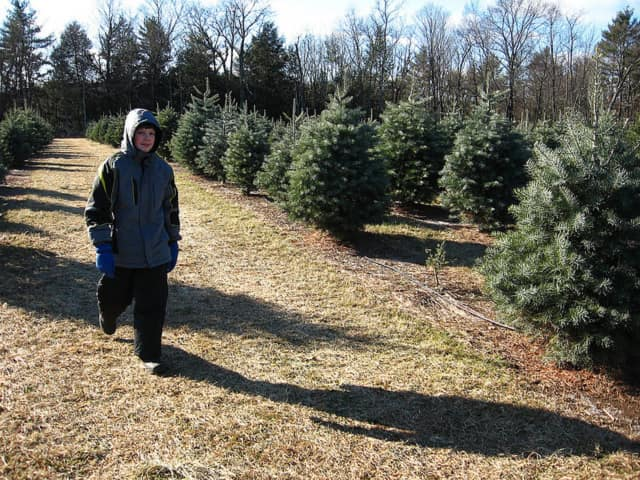 Orangetown police are offering Christmas tree safety tips.