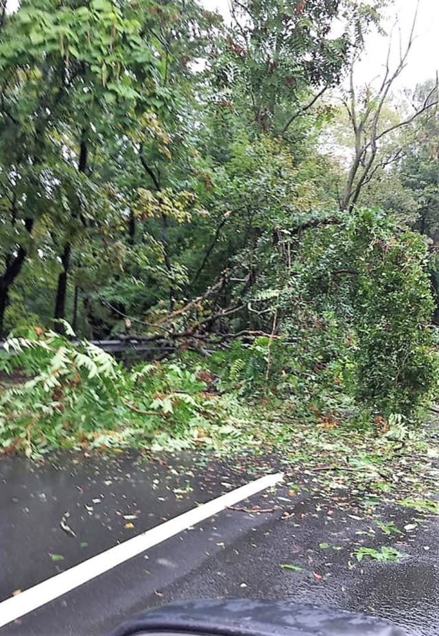 The tree fell near the corner of River and New Bridge roads.