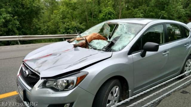 A driver was injured  Friday when a deer flew through the windshield.