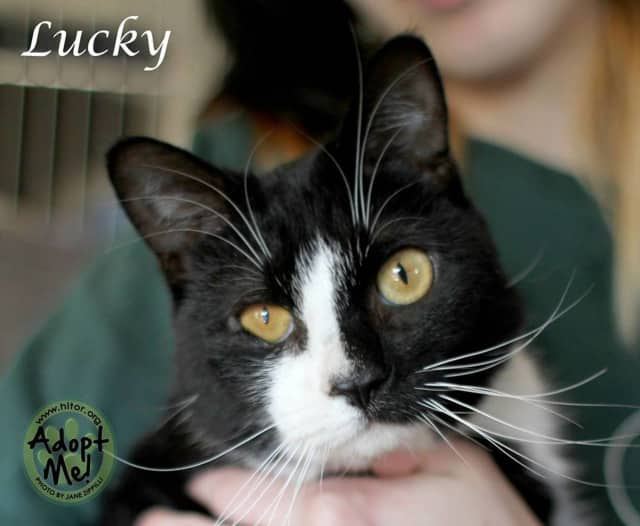 Lucky, a 2-year-old blind cat, is seeking a new home.