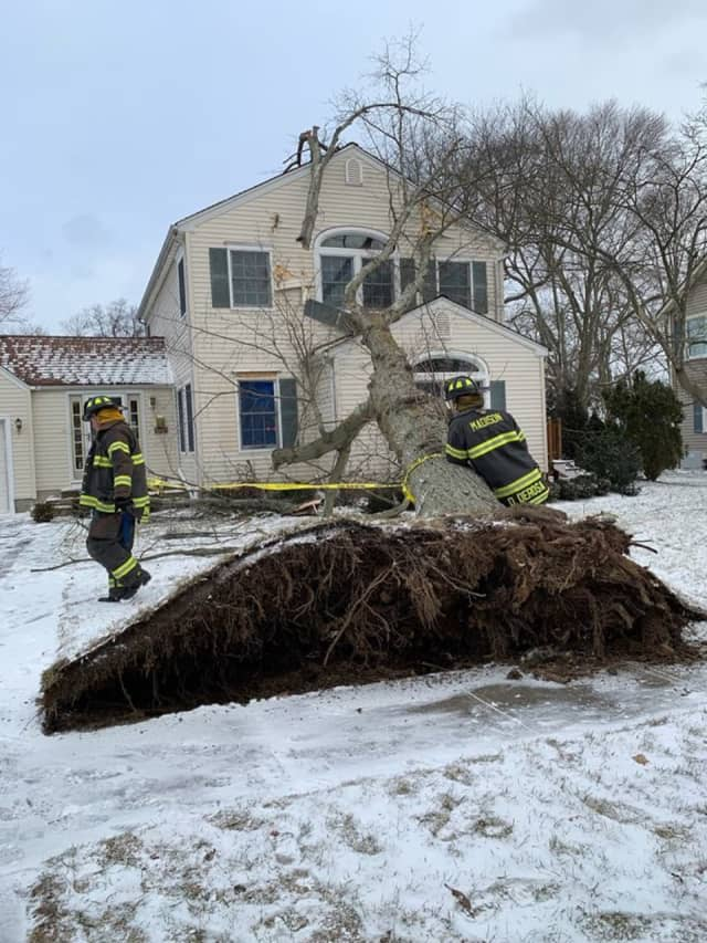 Firefighters removed a tree that fell on a Madison house Wednesday.