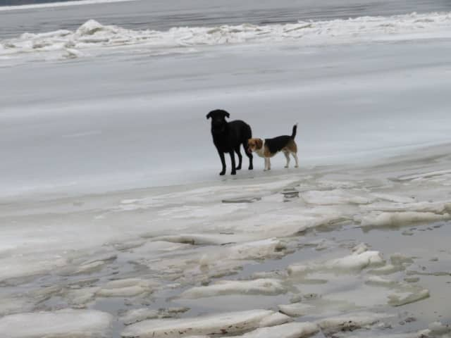 Two dogs were rescued from the ice by the Esopus Fire Department.