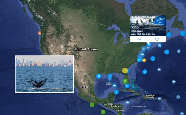 Sightings of great whites means local waters are healthy enough to produce the kind of fish and seals that make up the average white shark's diet.