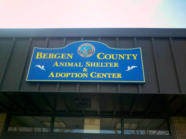 Bergen County Animal Shelter.