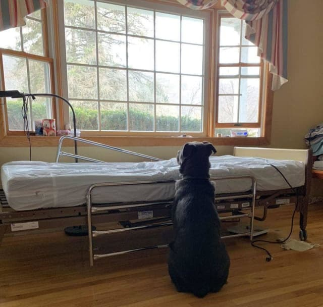 Moose waits next to his late owner's hospital bed.