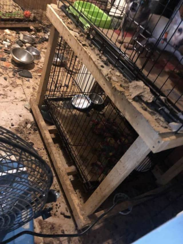 The horrid living conditions found inside the home.
