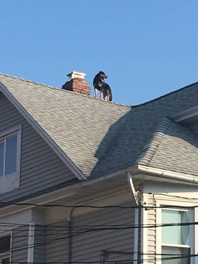 Bridgeport firefighters saved a dog who was stuck on a roof.