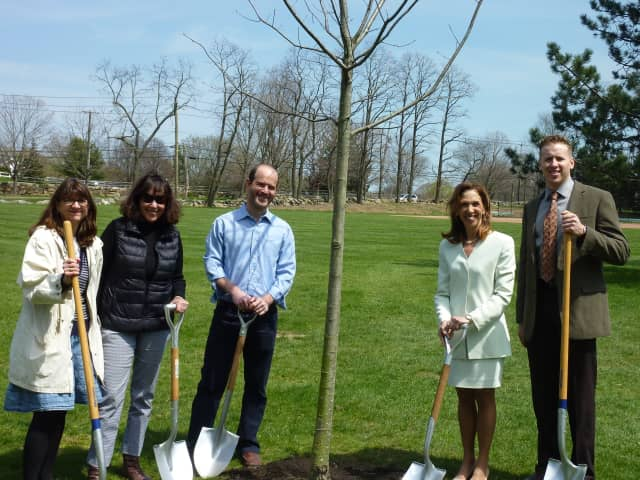 Scarsdale Assemblywoman Amy Paulin planting a tree last year. The village has been named a Tree City USA community for the 33rd straight year in 2015.