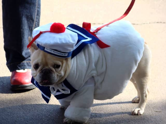 Paws in the Park will feature a Halloween costume contest for dogs.