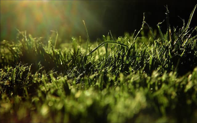 Tenafly DPW will begin collecting grass clippings April 15.