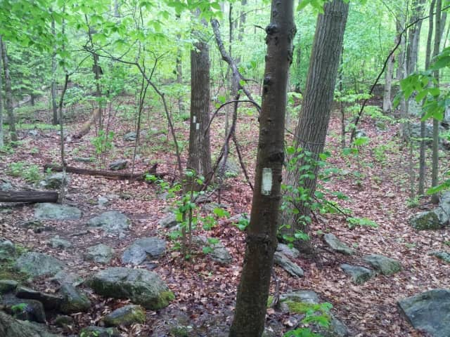 Appalachian Mountain Club meets on Tuesday, June 14 in Bethel.