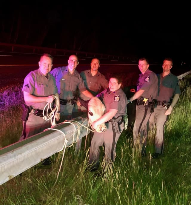 New York State Police troopers were able to round up a cow that was loose on the Thruway.