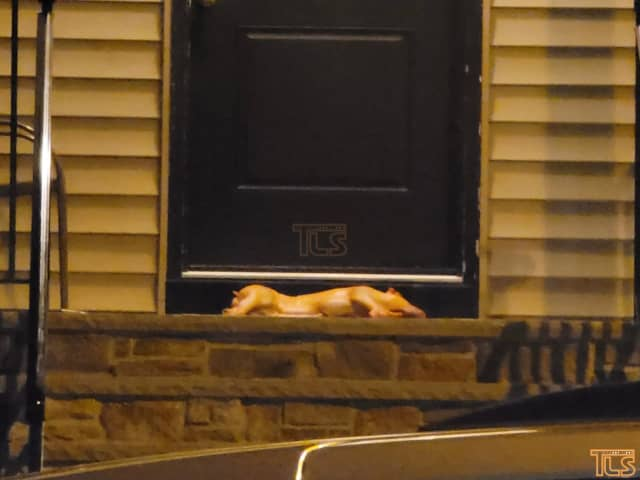 A pig carcass was left on the doorstep of a local Lakewood rabbi over the weekend.