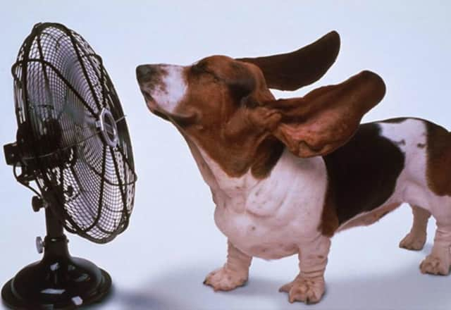 Find out how to stay cool and save money this summer.