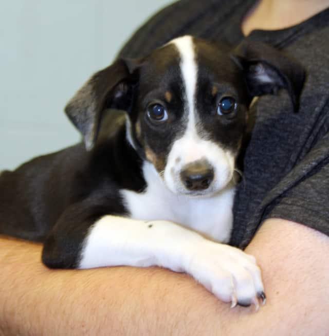 Petland Discount will host an adoption event on June 11.