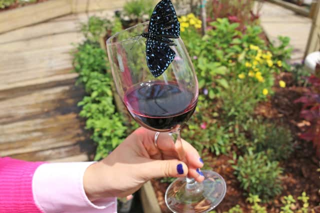 Raise a glass – and meet some exotic tropical butterflies – during the Flutter & Flights wine-tasting fundraiser on Wednesday at The Maritime Aquarium at Norwalk.