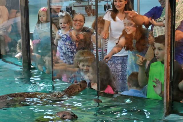 Norwalk residents can get close to the seals, sharks, sea turtles and other marine creatures of The Maritime Aquarium at Norwalk for free Saturday during the Aquarium's Salute Norwalk Day.