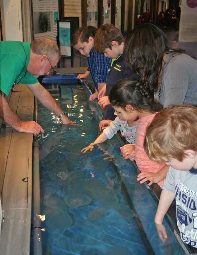 The Maritime Aquarium at Norwalk is seeking volunteers to help teach children about marine animals.