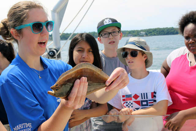 Devon Forest, an educator for The Maritime Aquarium at Norwalk, holds a summer flounder during one of the Aquarium's recent Marine Life Study Cruises.