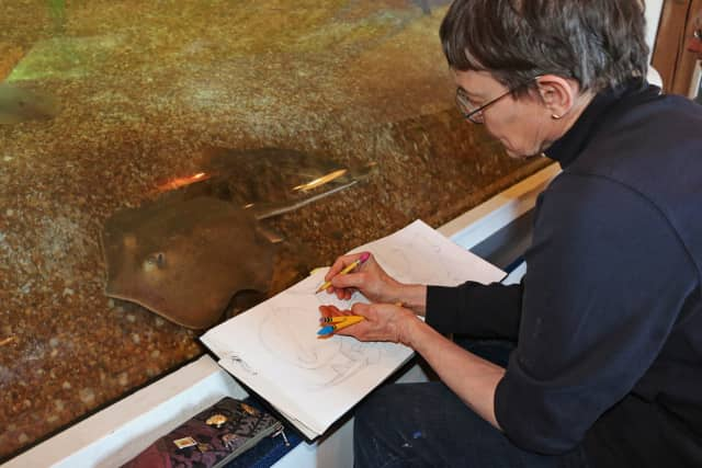 "The Maritime Aquarium at Norwalk will host ""Marine Animal Illustration,"" a five-week after-hours drawing-instruction course."