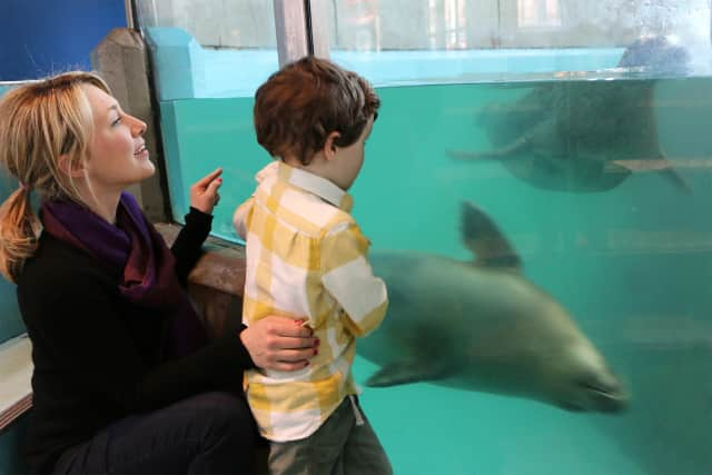 The Maritime Aquarium at Norwalk is hosting special classes for young children, throughout October.