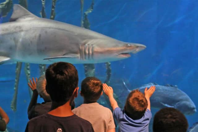 """Norwalk residents can get close to the sharks, seals, sea turtles and other marine creatures – and Santa Claus too – in The Maritime Aquarium at Norwalk for free on Saturday, Dec. 2 during the Aquarium's next """"Salute Norwalk Day."""""""