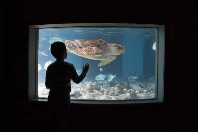 "Lights will be dimmed and sounds muted as The Maritime Aquarium at Norwalk presents ""Sensory-Friendly Mornings"" April 2-4."