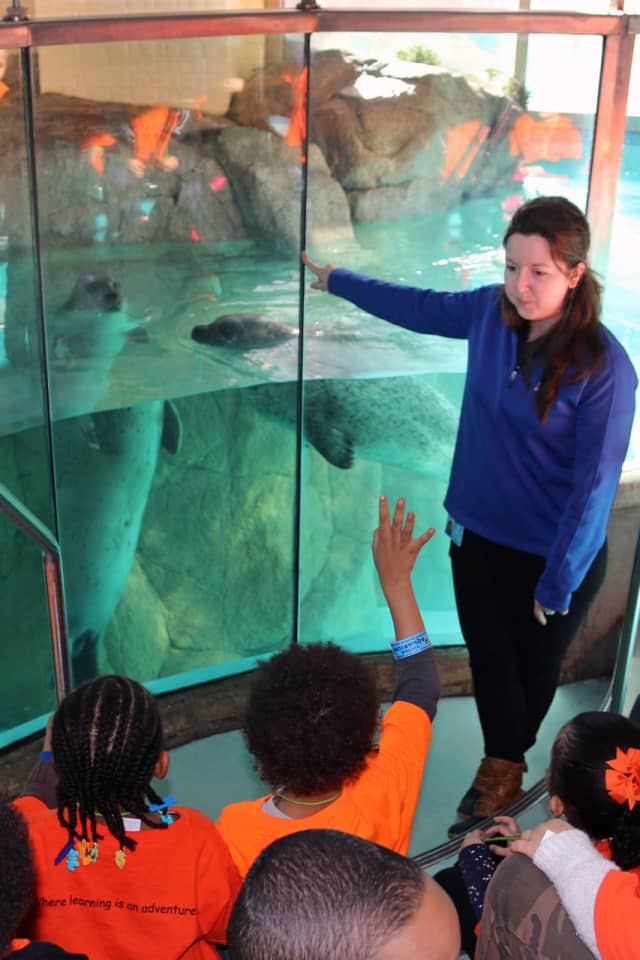 Preschool educational program at The Maritime Aquarium in Norwalk