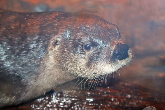 The Maritime Aquarium will have a winter coat drive this weekend, along with a special activity station to learn how animals, like river otters, survive in the cold ocean.