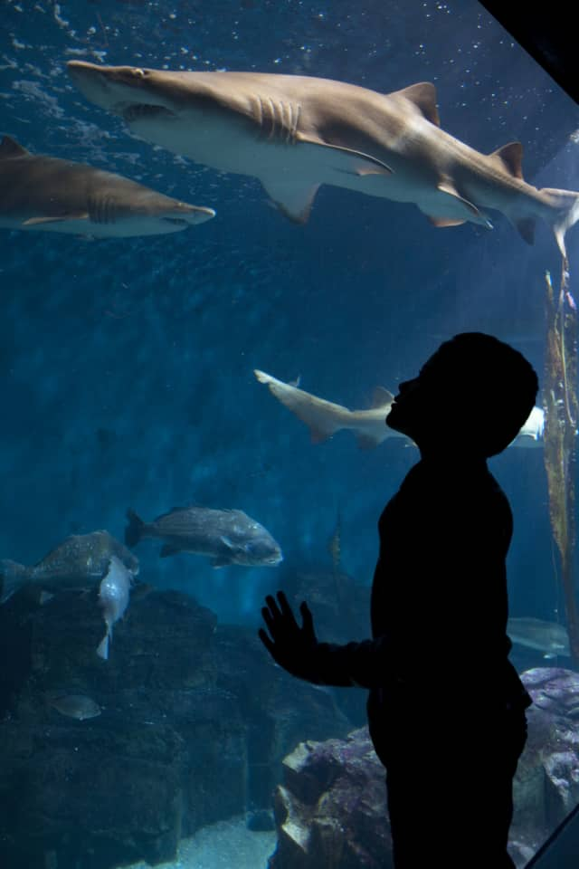 A Dec. 12 program at The Maritime Aquarium at Norwalk will keep kids ages 5-10 busy with fun explorations of the ocean world.