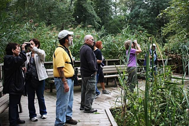 The local Audubon Society is hosting a Father's Day walk at the Teaneck Creek Conservancy.