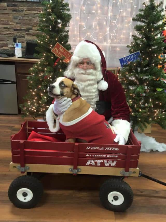 Families with pets can have holiday photos taken with Santa this weekend to benefit the Bergen County Protect and Rescue Foundation.