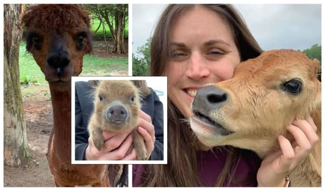 Some of the animals and a loving visitor at Sugar Sweet Farms in Sussex County.