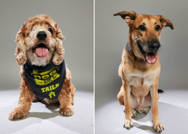 Lexi, left, and Kody, right, will appear on Animal Planet's first-ever Dog Bowl.